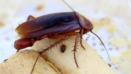 Cockroach Pest Control Toronto