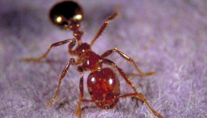 Ants Exterminator