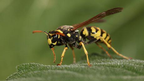 Wasp Control Toronto