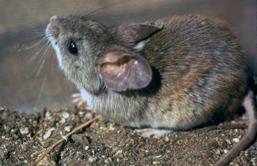 Mice Exterminator Toronto