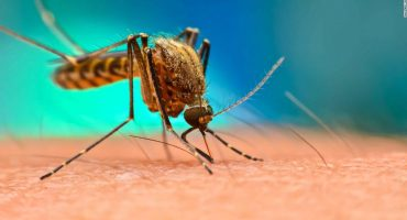 Top 5 Ways To Keep Your Home Mosquito-Free